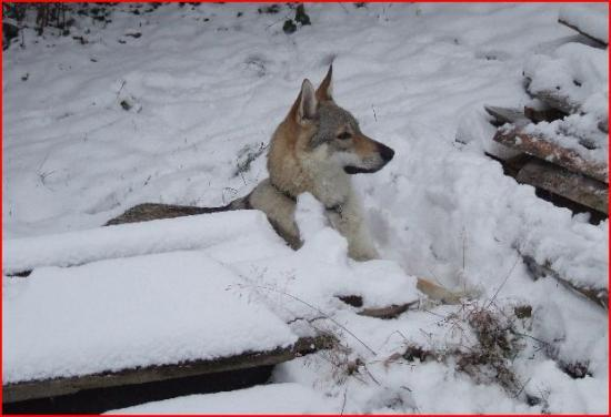 neige daika