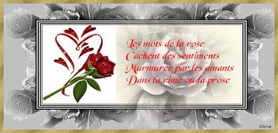 Langage des roses - Signification des roses rouges ...