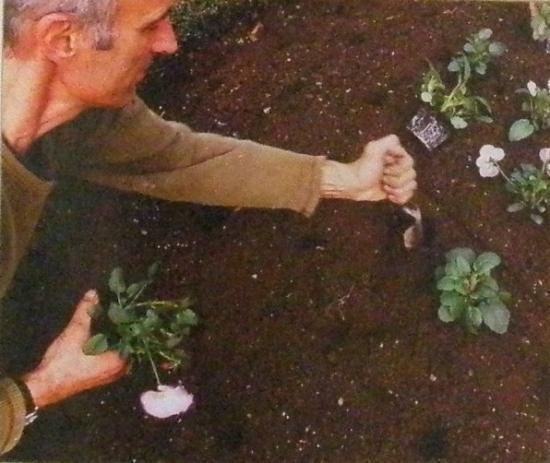 Jardinage en fevrier for Conseil de jardinage