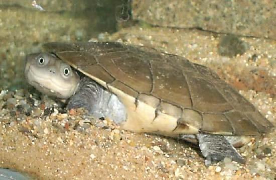 L 39 arche de no tortue aquatique for Aquarium tortue aquatique