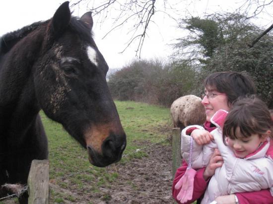 Juliette aimerait caresser le cheval
