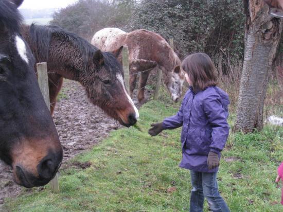 Charlotte donne de l'herbe au cheval