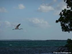 Ilet aux oiseaux