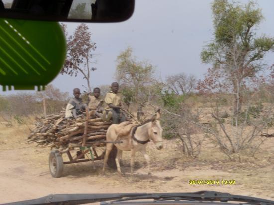 Les enfants transportant du bois de chauffe.