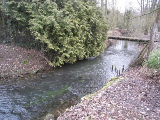 La Viosne à Brignancourt