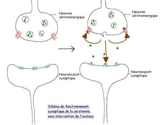 effets drogue sur cerveau