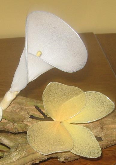 Arum et papillon