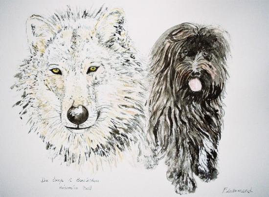 Du loup à Boulichou