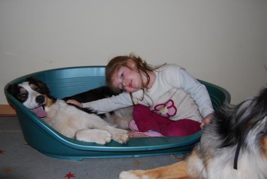 accidents chiens enfants