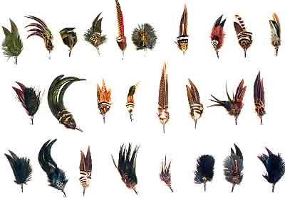 Plumes2