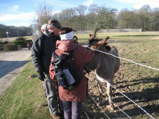 Patrick, Paula et l'âne