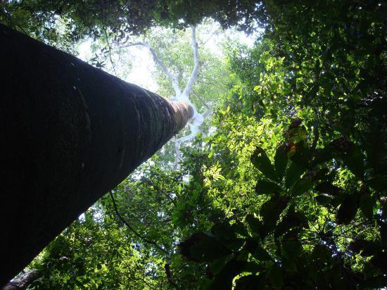 faune & flore Costa Rica @hellomisterd.com
