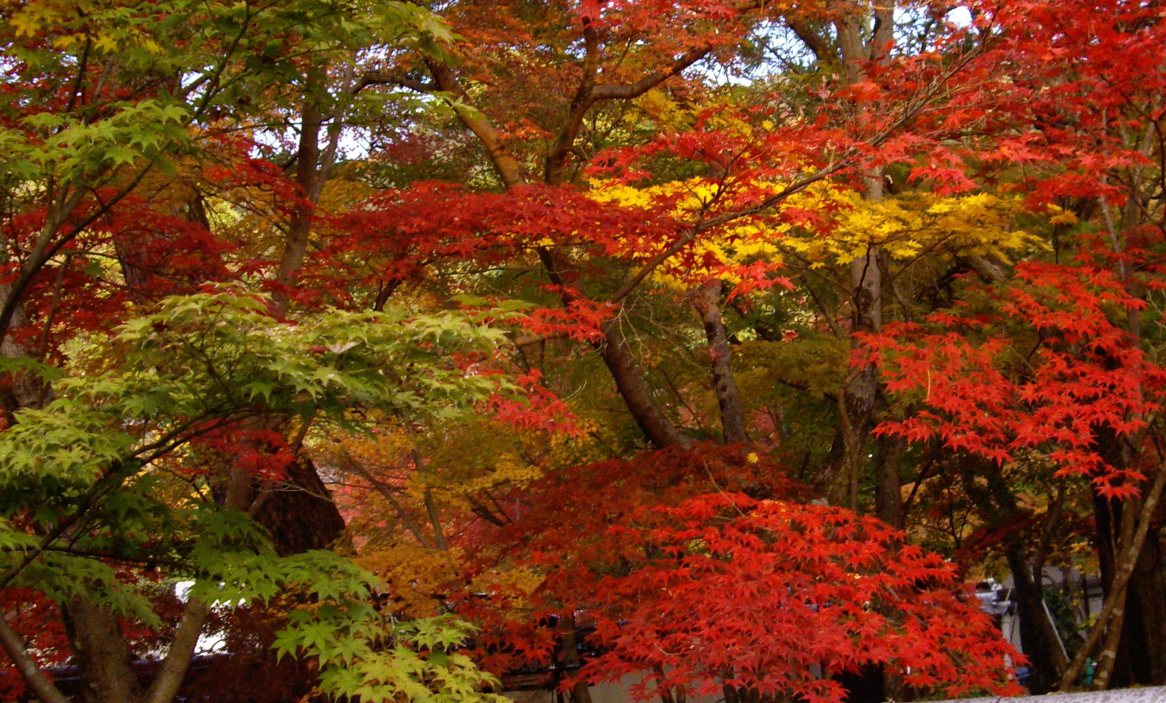 Cr ation jardin zen jardin japonais paysagiste al s nimes for Paysagiste jardin japonais