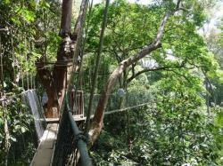On prend de la hauteur avec la Canopy Walkway