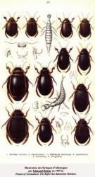 Dytiscidae Coll. A.M.B. Le Moulin de Prey. org