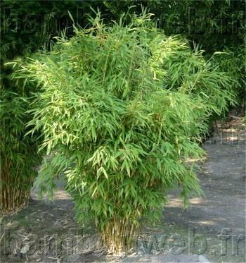 Tout Ce Qu Il Faut Savoir Sur Les Bambous