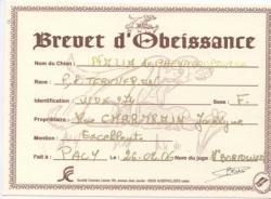 brevet d'obé
