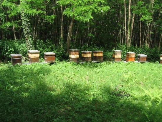 les ruches de Marey