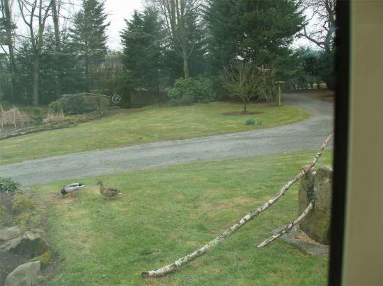 2010.03.13 Canards cols verts dans notre pré carré