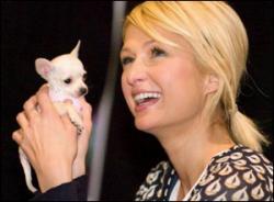 Paris Hilton avec un chihuahua.