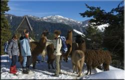 Visiteurs en hiver