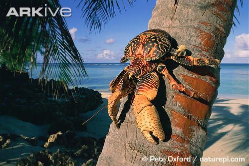 Le plus grand arthropode terrestre