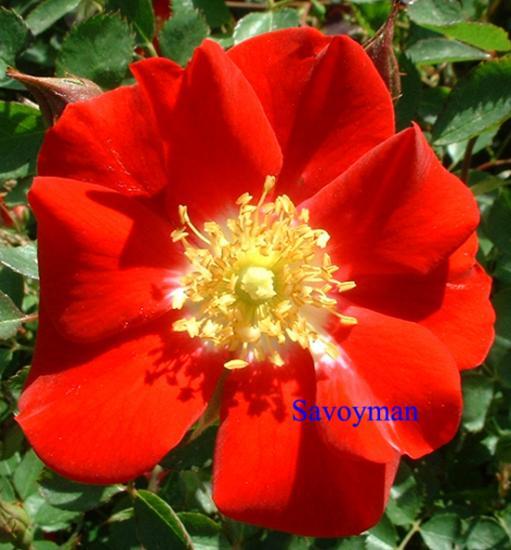 Rosa Eyepaint
