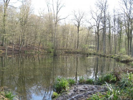 Mare des Sylphes en Forêt de Carnelle