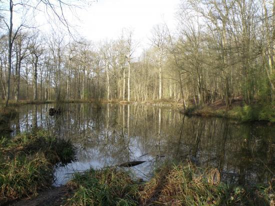 la Mare des Sylphes en forêt de Carnelle