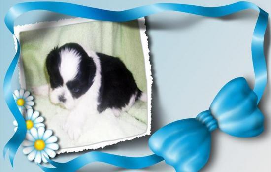 garçon noir et blanc 1 mois