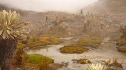 Cocuy - cactuses y pantanos