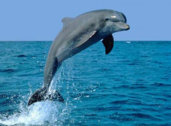 photos orques mer