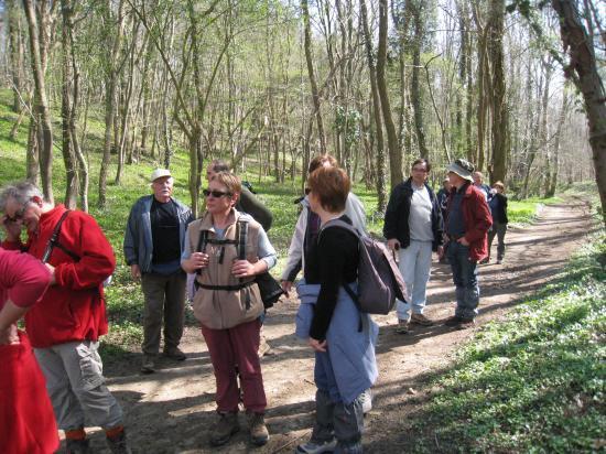 Randonneurs en forêt d'Halatte (60)