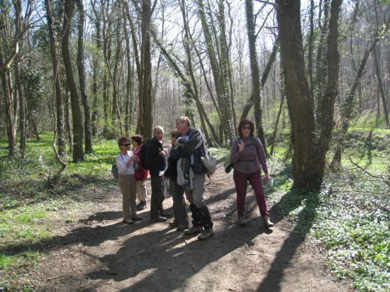 Randonneurs en Forêt d'Halatte