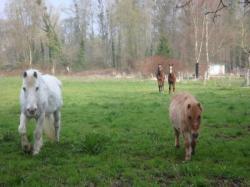 chevaux pré