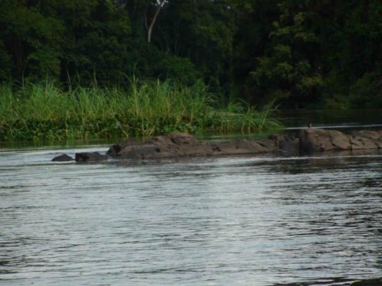 rocher dans le fleuve bandama
