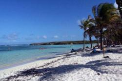 plage et cocotiers