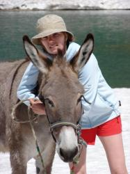 Un âne à Vensoc