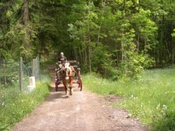 Balade d'ânes en calèche à Venosc