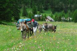 Balade d'ânes en Isère