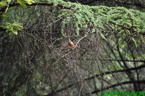 forêt de la musse BAULON