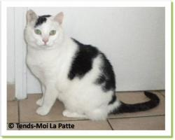 Giant, chat à adopter