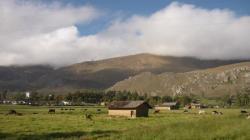 La Hacienda La Colpa y sus vacas - Cajamarca