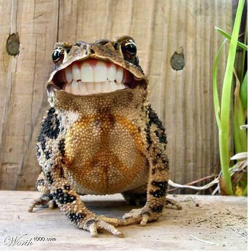 la ris233e des grenouilles