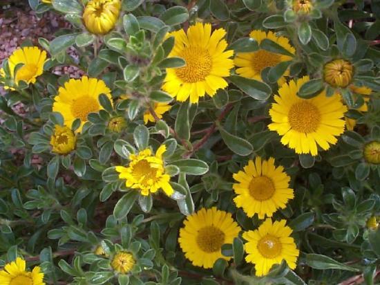 fleurs jaunes vivaces On fleurs jaunes jardin vivace