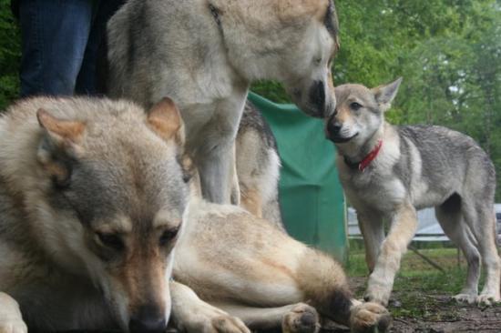 Une occasion supplémentaire de faire rencontrer des personnes ainsi que des chiens inconnus à Salvador et Fletcher