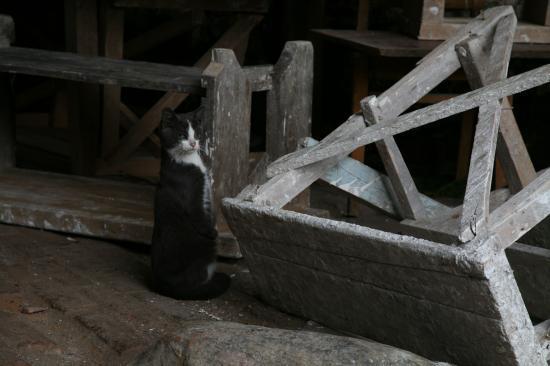 Chat malade recueilli par les moines = Болезненная кошка, ухаживающая монахами