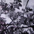 Hanami # 39 - 2009 - Acrylique sur papier  marouflé sur toile 60 x 60 cm