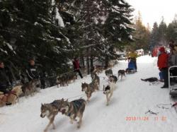 Chrisstian en 8 chiens