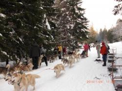 Jean Marc en 7 chiens